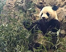 Bao Bao (born 8/23/13)